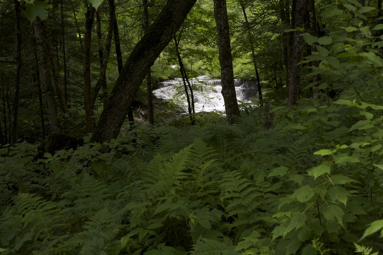 2012 - Lush woods, looking at the larger waterfall