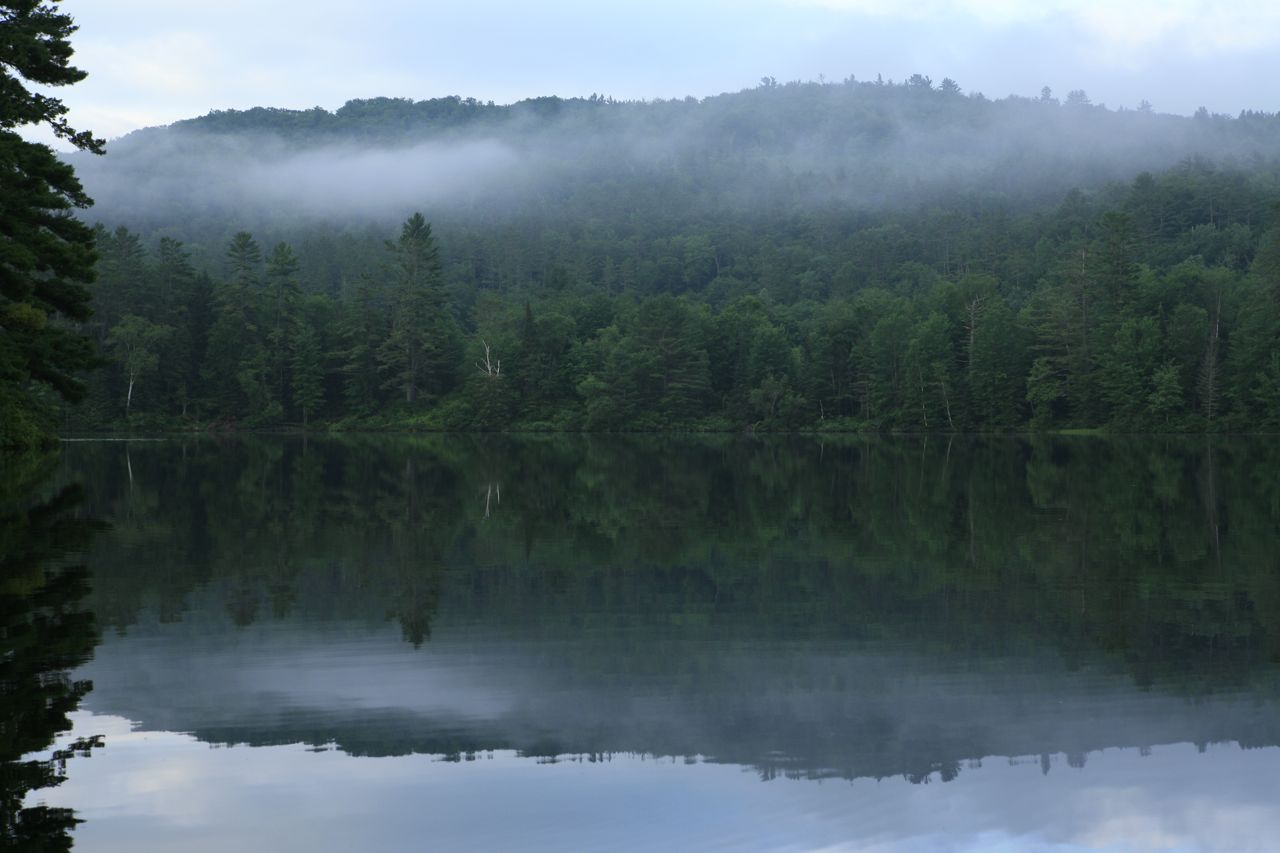 2013 - Early morning canoeing trip - water, fog, trees and reflection