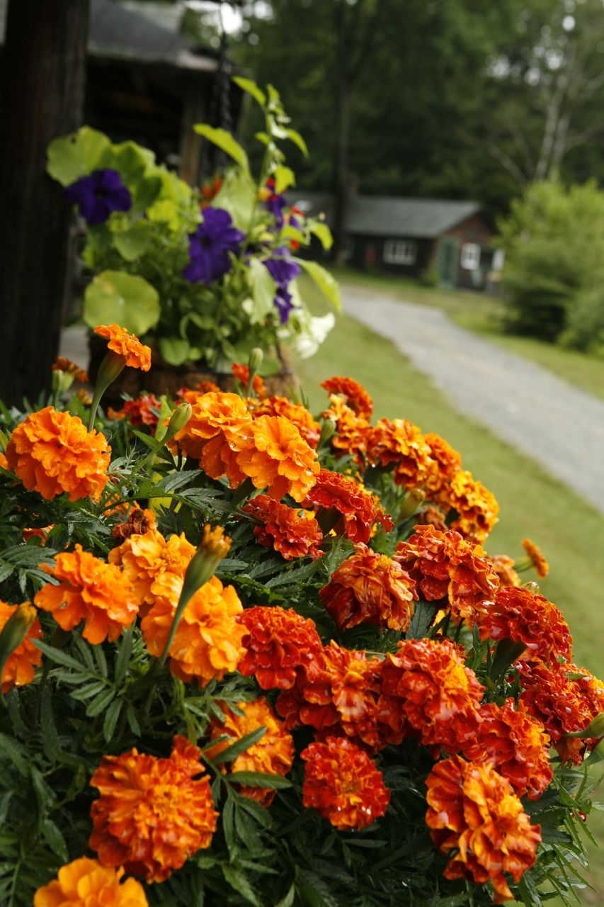 2014 - Beautiful flower boxes were on all of the cabins
